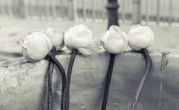 要崇拜菩萨的莲花 免版税库存照片