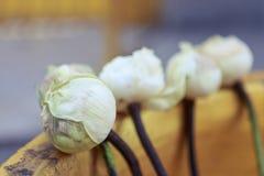 要崇拜菩萨的莲花 免版税库存图片