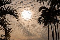 覆盖在棕榈树后剪影的scape在桔子的 库存照片