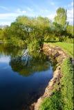 覆盖平安的河风景树型视图 图库摄影