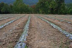 覆盖树根影片或塑料盖子土壤保留的湿气和控制除草在庄稼 免版税图库摄影