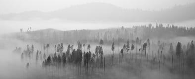 覆盖森林优胜美地 免版税图库摄影