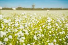 覆盖湖本质天空 开花通配 白色草花 免版税库存照片