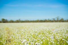 覆盖湖本质天空 开花通配 白色草花 免版税图库摄影