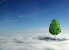 覆盖结构树 免版税库存照片