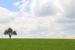 覆盖结构树 免版税图库摄影