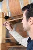 观察种葡萄并酿酒的人 库存照片