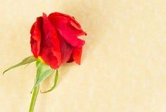 观点上面的在羊皮纸背景的红色玫瑰与文本的空间 免版税图库摄影