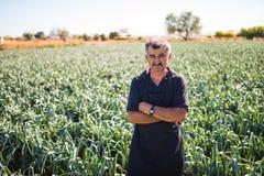 观点的一个中年人用收获沙拉圆白菜菜的横渡的手自温室 农业 免版税库存照片