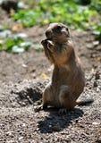 观点的一个小动物-专家 免版税库存照片