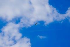观点的一只飞行海鸥在与白色云彩的蓝天下 库存图片