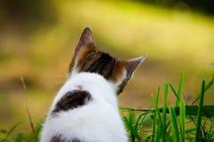 观点的从后面的一只小猫 免版税库存图片