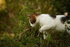 观点的从边的一只小猫 免版税库存照片
