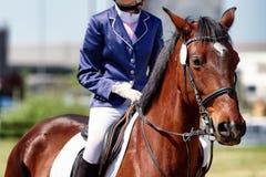 观点的关闭的在竞争种族的一匹马 免版税库存照片