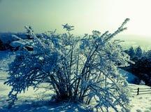 观点的在一座山顶部的布什在冬天蓝色口气 免版税图库摄影