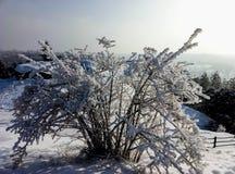 观点的在一座山顶部的布什在冬天 库存图片