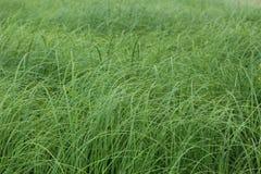 观点的在背景的绿草 免版税库存图片