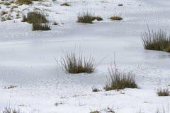 草和雪 免版税库存照片