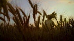 观点的愉快的妇女通过在跑在日落的麦田的成熟麦子耳朵 影视素材