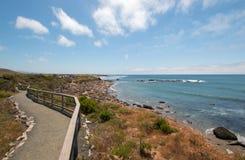 观点的海象殖民地在点在圣西梅昂北部的Piedras Blancas加利福尼亚中央海岸的  库存照片