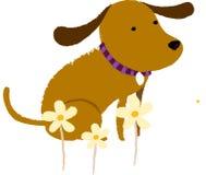 观点的狗 免版税库存图片