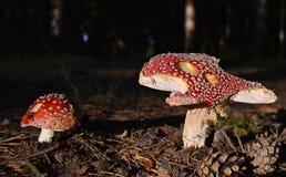 观点的秋天蘑菇,南波希米亚 库存图片