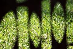 观点的绿草 库存图片