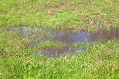观点的水坑和草 库存照片