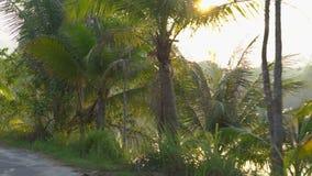 观点被射击有棕榈树的一条美丽的热带路和在树后的一个湖在日落期间 在的旅行 影视素材