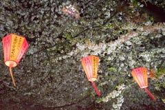观看东京节日的樱桃开花用灯笼 库存图片