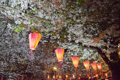 观看东京节日的樱桃开花用灯笼 免版税库存照片