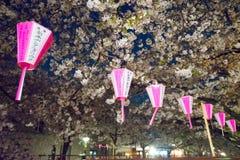 观看东京节日的樱桃开花用灯笼 免版税库存图片
