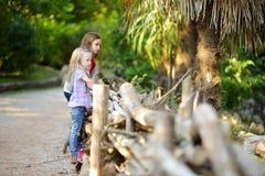 观看动物的两个逗人喜爱的妹在动物园里在温暖和晴朗的夏日 观看动物园动物的孩子支持fe 库存图片