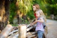 观看动物的两个逗人喜爱的妹在动物园里在温暖和晴朗的夏日 观看动物园动物的孩子支持fe 免版税库存照片
