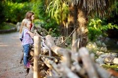 观看动物的两个逗人喜爱的妹在动物园里在温暖和晴朗的夏日 图库摄影