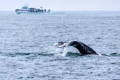 观看在南加州的鲸鱼 图库摄影