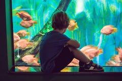 观看在大海洋生活坦克的小男孩和女孩热带珊瑚鱼 在动物园水族馆的孩子 库存图片
