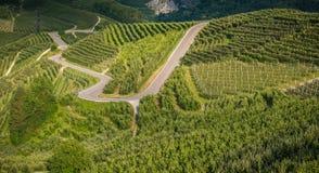 观看在特伦托自治省女低音下阿迪杰,意大利田园诗葡萄园和果树园  特伦托自治省南蒂罗尔 库存图片