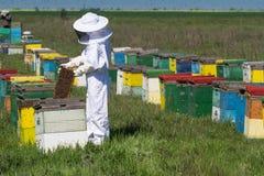 观看在他的蜂蜂房的养蜂家 免版税库存图片