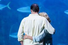 观看坦克鱼的夫妇背面图  免版税图库摄影