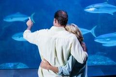 观看坦克鱼的夫妇背面图  免版税库存照片