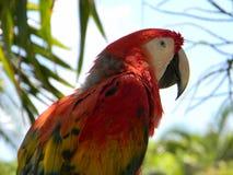 观看天际的金刚鹦鹉细节 免版税库存照片