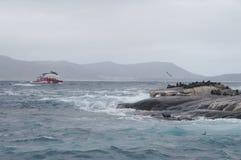 观看封印的游人在小羚羊海岛在开普敦,南Afr附近 库存图片