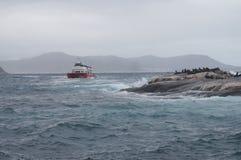 观看封印的游人在小羚羊海岛在开普敦,南Afr附近 图库摄影