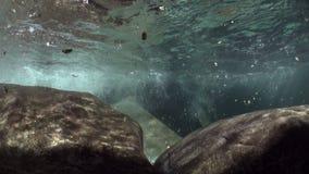 观看山河Verzasca强的潜在势力水中  影视素材