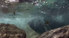 观看山河Verzasca强的潜在势力水中  股票视频