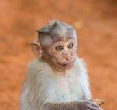 观看帽子的短尾猿mischieviously 免版税库存图片