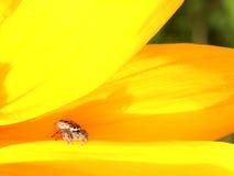 观看您的蜘蛛 免版税库存照片