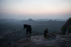 观看日出的两条狗 Hampi,印度 免版税库存照片
