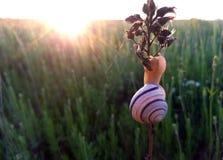 观看日落的蜗牛 免版税库存图片